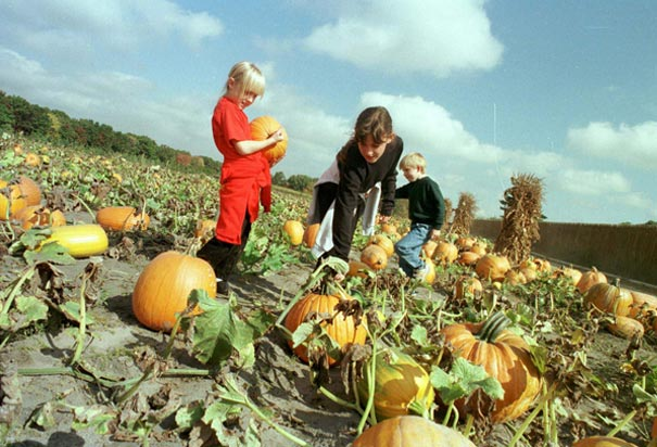 Choosing Halloween Pumpkins