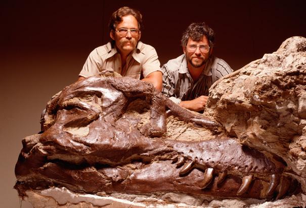 Tyrannosaurus+rex+skull+for+sale