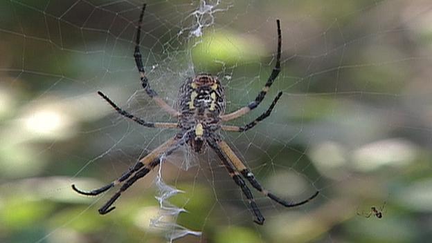 Giant Arachnids