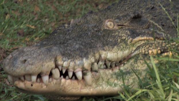 Super Crocs